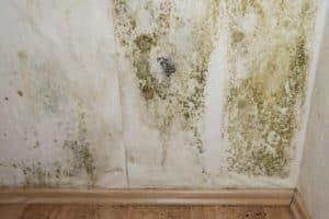 Mold Testing Coral Springs